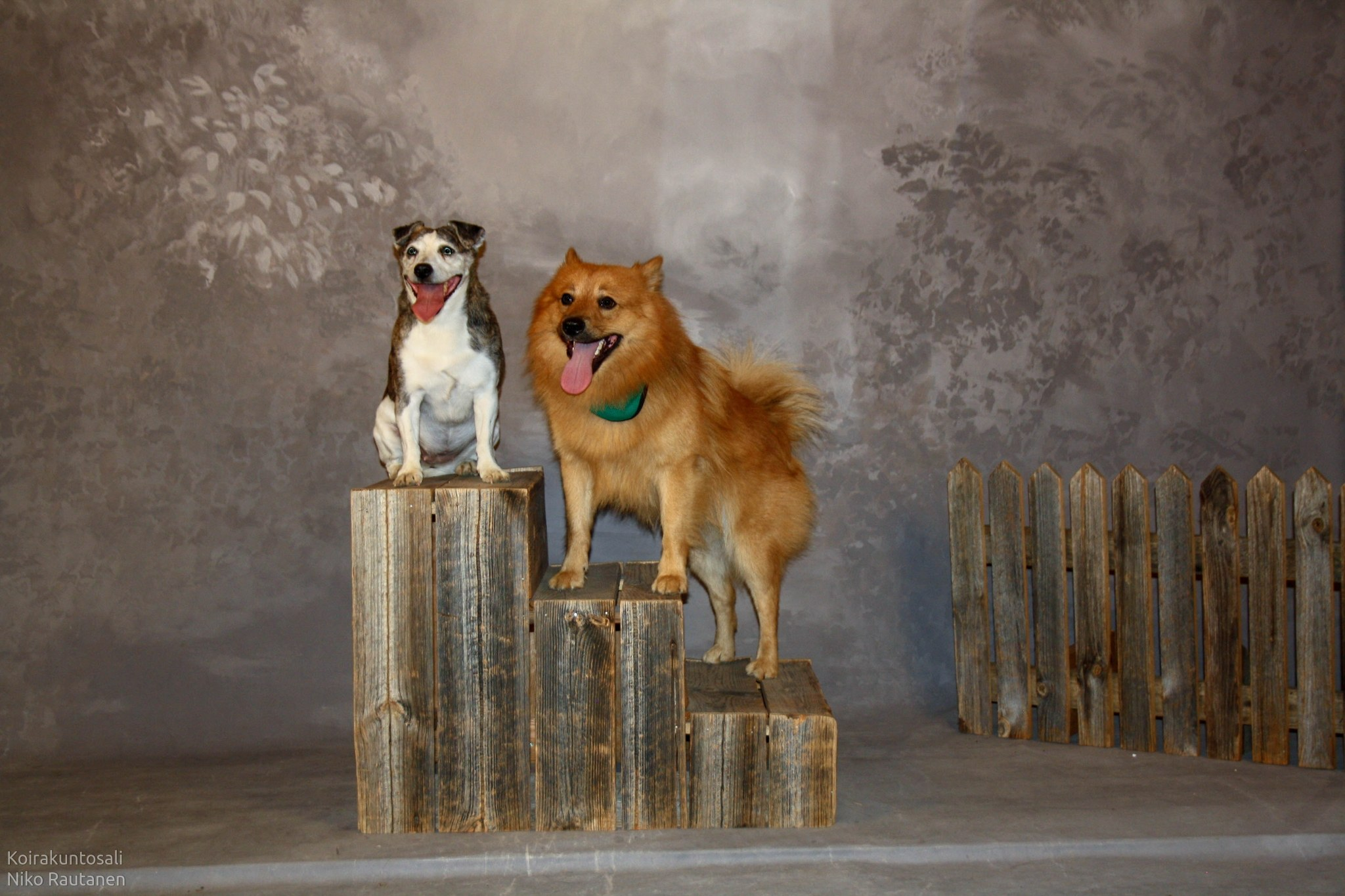 Studio Doggo
