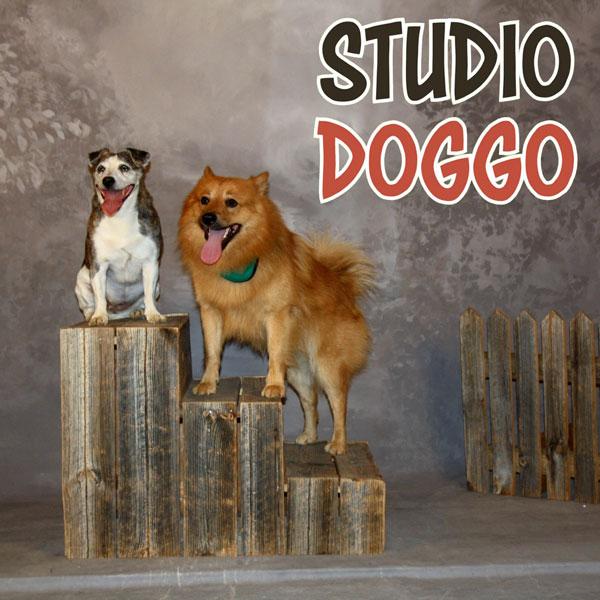Hunsvottila Studio Doggo